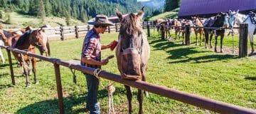 Op zoek naar een mooie paardrijtocht voor de klant?
