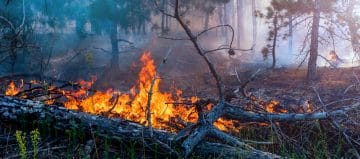 Evacuaties Gran Canaria door bosbranden
