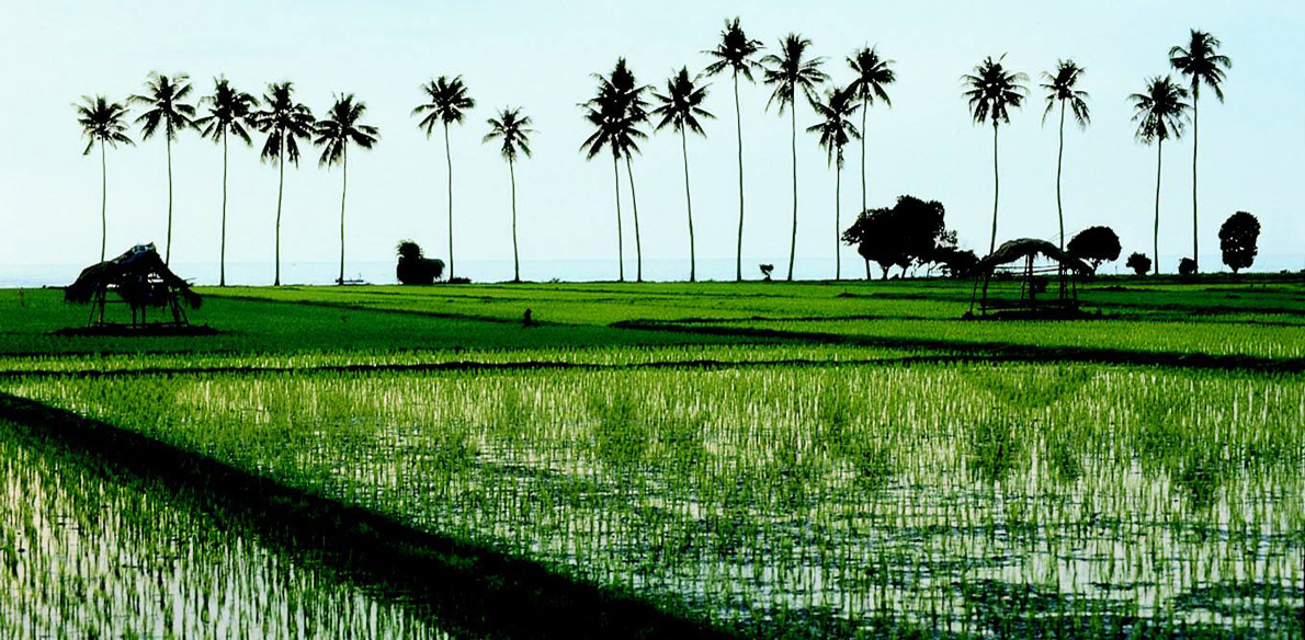 Holland International breidt uit op Bali