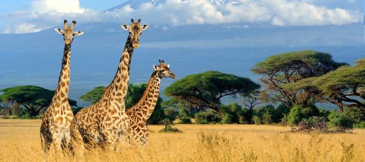 TUI gaat Kenia weer aanbieden