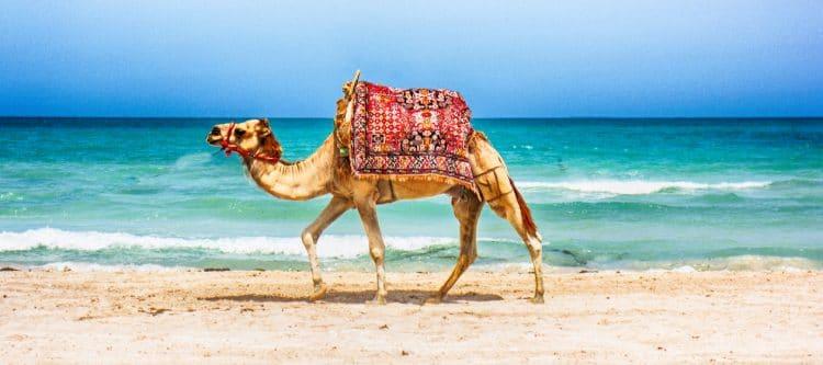 TUI weer naar Tunesië