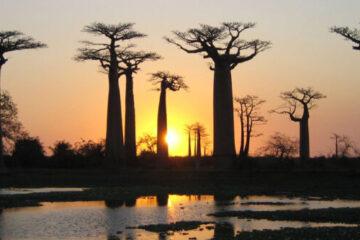 Reismerken Sawadee en Baobab samen verder