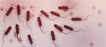 Thomas Cook: poepbacterie in Egyptisch hotel waar Britten overleden