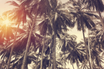 Deze reisorganisaties zijn voorlopig gestopt met het uitvoeren van vakanties