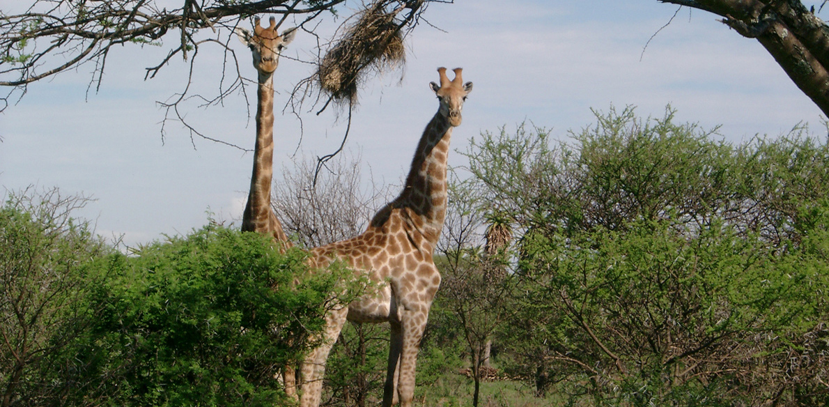 TUI neemt Zuid-Afrika rondreis met Kassie over van Oad